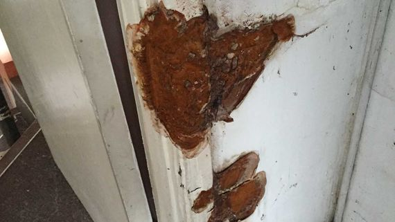 Wood worm damage